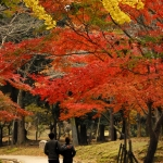 Japan Photo Guide Fall-002