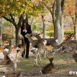 Japan Photo Guide Fall-004