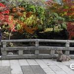 Japan Photo Guide Fall-005