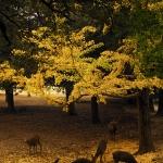Japan Photo Guide Fall-021