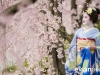 Maiko Portrait Session-13-japanphotoguide
