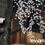 Kyoto-28-japanphotoguide