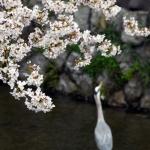 Kyoto-30-japanphotoguide