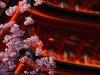 Miyajima-14-japanphotoguide