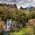 129-Mt-Fuji-Cherry-Blossom