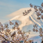 143-Mt-Fuji-Cherry-Blossom
