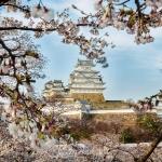 059-Himeji-Cherry-Blossom