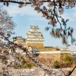 060-Himeji-Cherry-Blossom