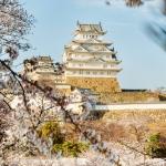 061-Himeji-Cherry-Blossom