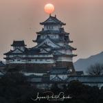 067-Himeji-Cherry-Blossom