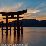 Japan-Cherry-Blossom-139-L