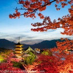 Japan-Cherry-Blossom-140-L