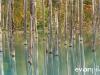 blue-pond-006