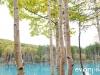blue-pond-012