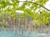 blue-pond-013