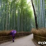 kyoto-bamboo-003