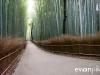 kyoto-bamboo-002
