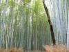 kyoto-bamboo-005