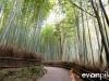 kyoto-bamboo-010
