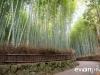 kyoto-bamboo-011