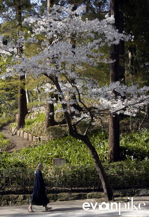 Tokyo-51-japanphotoguide