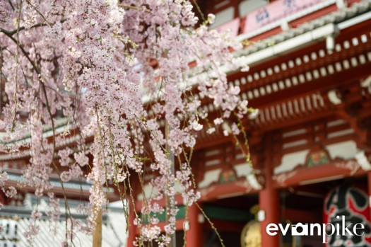 Tokyo and Kyoto-15-japanphotoguide