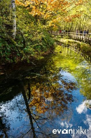 Taisho Pond-JapanPhotoGuide-031