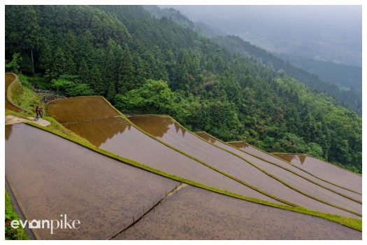 Warabino-Rice-Terrace-JapanPhotoGuide-08