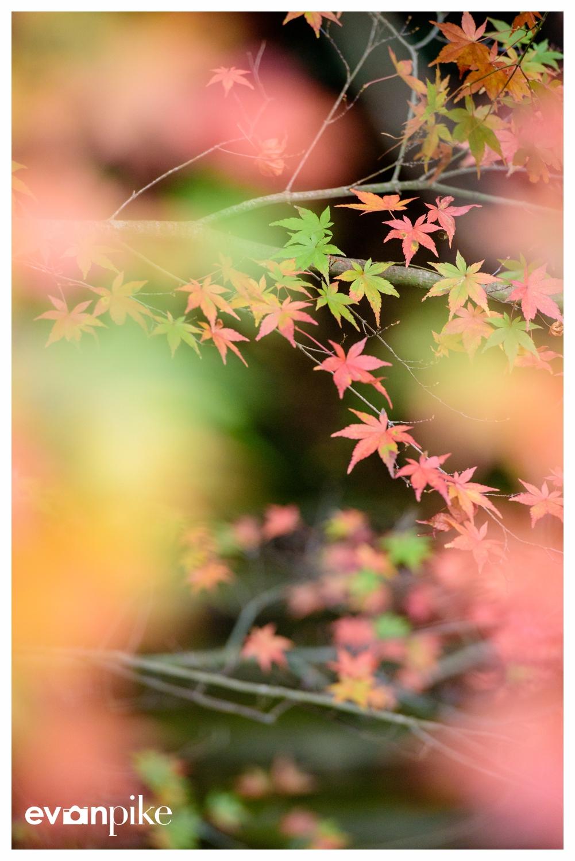 Natadera Japan Photo Guide 034