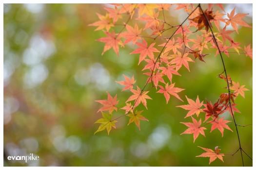 Japan Photo Guide Tofukuji 002
