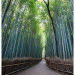 Arashiyama Japan Photo Guide Bamboo 105