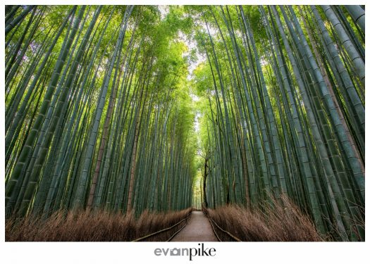 Arashiyama Japan Photo Guide Bamboo 106