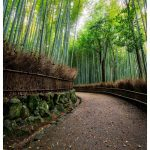 Arashiyama Japan Photo Guide Bamboo 107