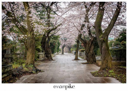 Japan Photo Guide Aoyama Cemetery 013