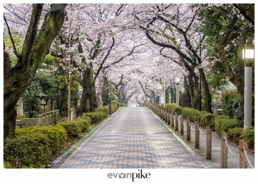Japan Photo Guide Aoyama Cemetery 015