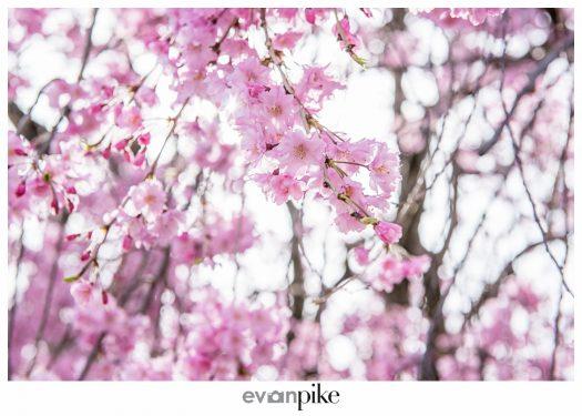 Japan Photo Guide Himeji 052