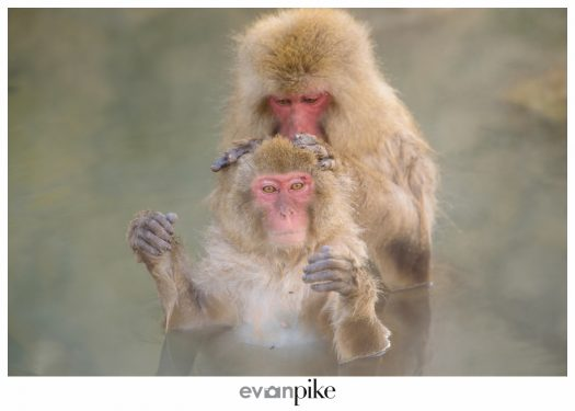 Japan Photo Guide Snow Monkeys 005