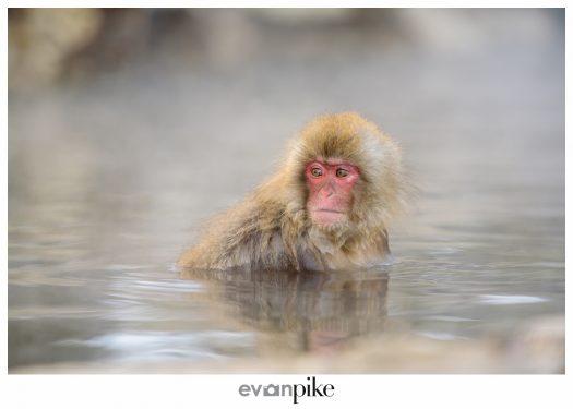 Japan Photo Guide Snow Monkeys 009