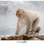 Japan Photo Guide Snow Monkeys 015