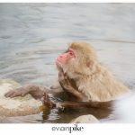 Japan Photo Guide Snow Monkeys 019