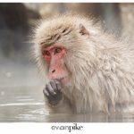 Japan Photo Guide Snow Monkeys 024