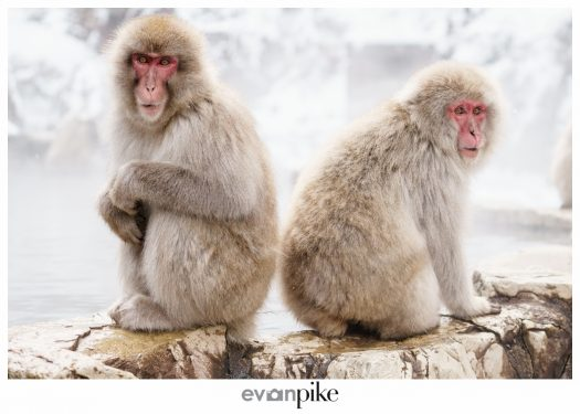 Japan Photo Guide Snow Monkeys 027
