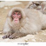 Japan Photo Guide Snow Monkeys 031