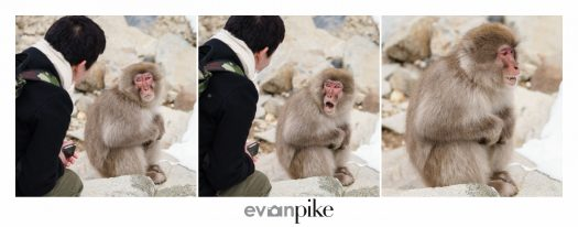 Japan Photo Guide Snow Monkeys 032