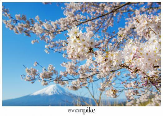 Kawaguchiko Mt Fuji Japan Photo Guide129