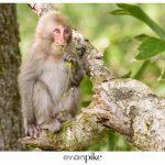 Japan Photo Guide Kamikochi 002