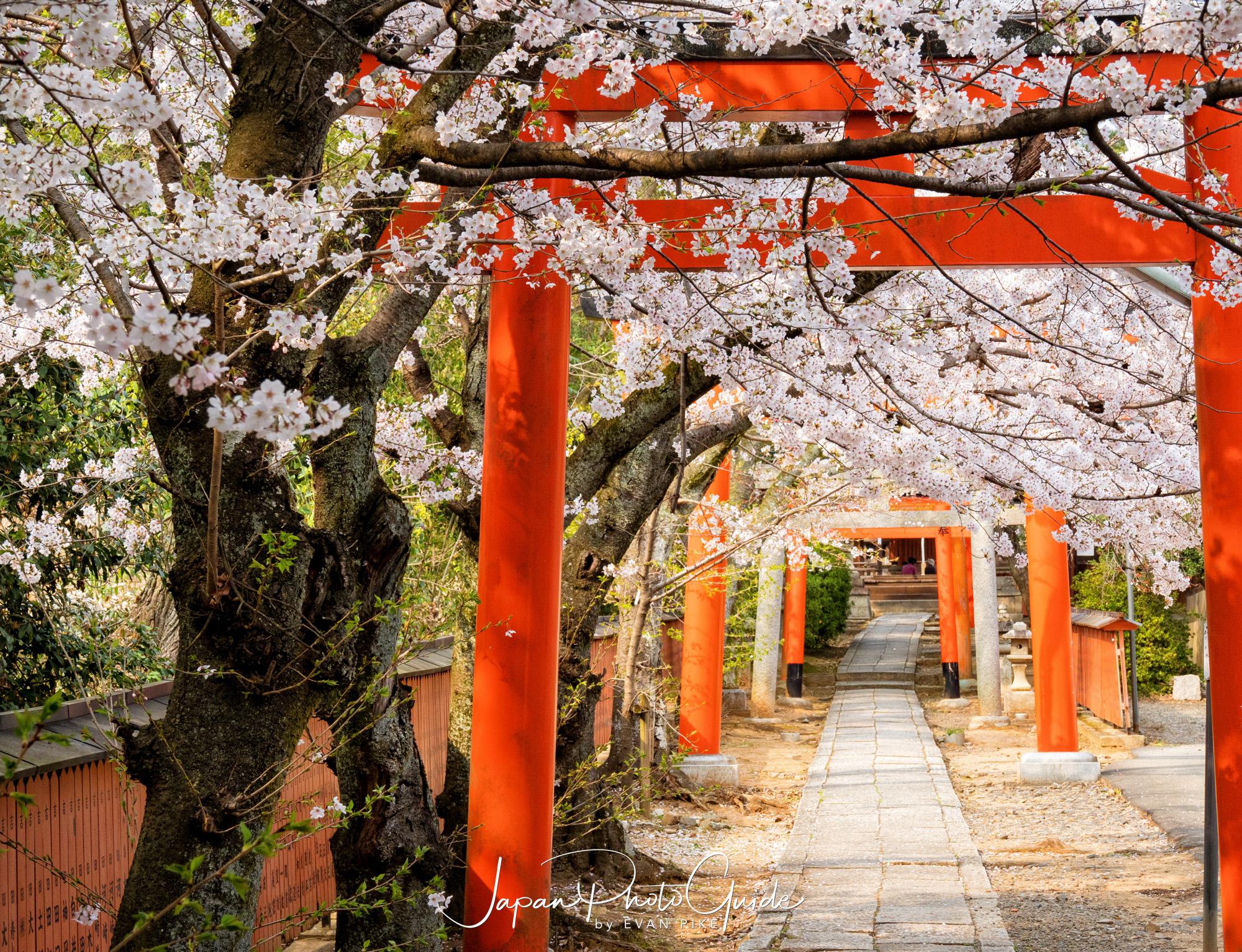 2019 Cherry Blossom Photo Tour Kyoto Japan Photo Guide