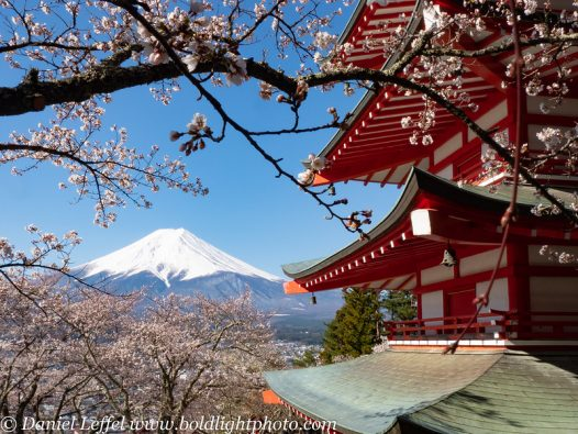 This image has an empty alt attribute; its file name is Japan-Cherry-Blossom-355-L-2-526x395.jpg