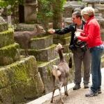 Japan-Photo-Guide-283