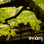 japan-photo-guide-357